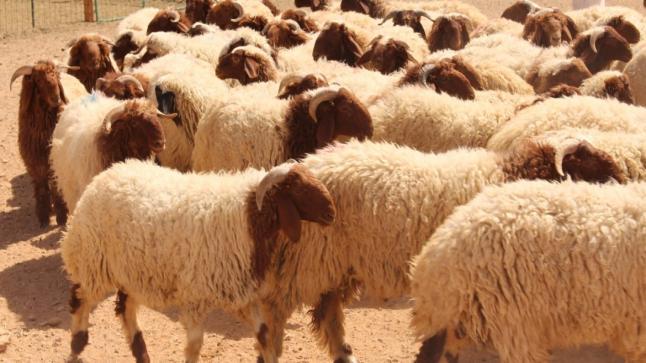 ببن الطيب :جمعية الوحدة للنهوض بالعمل الإجتماعي تطلق حملة لجمع التبرعات لإقتناء أضاحي العيد