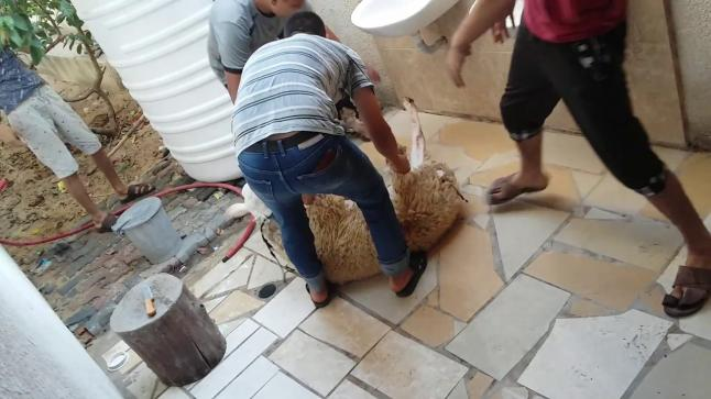 منظمة الصحة العالمية تنشر الممارسات المأمونة أثناء عيد الأضحى في سياق جائحة كورونا