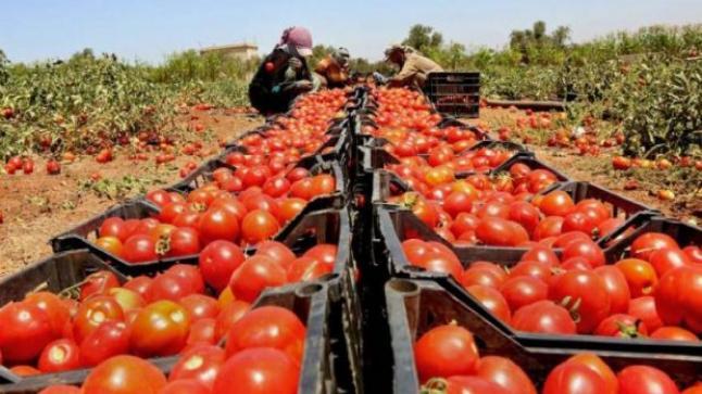 أخنوش: مجموع صادرات الخضروات والفواكه بلغ إلى حدود يناير الجاري أزيد من 474 ألف طن